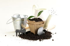 Green plant grows from the ground with garden tools Royalty Free Stock Photo