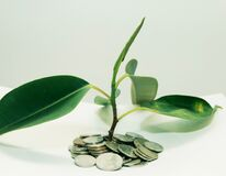 plant grows through iron money coins on a white background