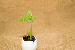 The green  plant grows from the soil, sprinkling in the egg on o Royalty Free Stock Photos