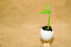 The green  plant grows from the soil, sprinkling in the egg on o Stock Photography