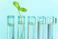 Green plant grows in test tube filled with water stock photo