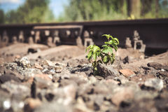 Green plant grows from under the stones Near railway tracks Stock Images