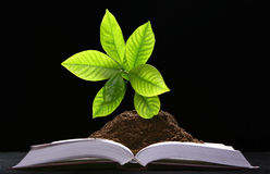 Green plant growth from book Royalty Free Stock Photos