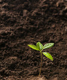 Green plant growth Stock Photo