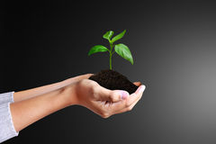 Green plant in a hand Royalty Free Stock Image