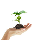 Green plant in a hand Royalty Free Stock Images