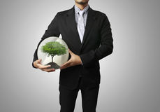 Green plant in a hand Stock Photos