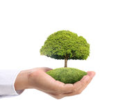 Green plant in hand Stock Image