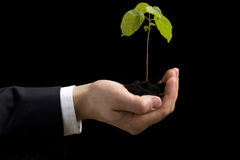 Green plant in the hand. On a dark background Royalty Free Stock Photos