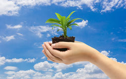 Green plant in the hand on blue sky background Stock Images