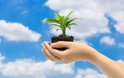 Green plant in the hand on blue sky background Stock Photo