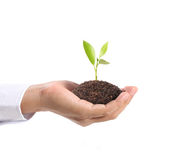 Green plant in hand Stock Photography