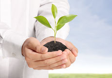 Green plant in hand Royalty Free Stock Photography