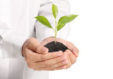 Green plant in hand Royalty Free Stock Photos