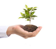Green plant in hand Royalty Free Stock Image