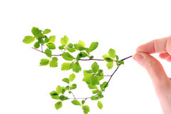 Green plant in hand isolated Royalty Free Stock Photos