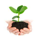 Green plant in hand new life. Isolated royalty free stock photography