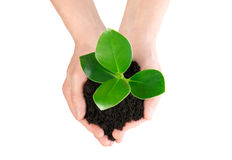 Green plant in hand new life from up Royalty Free Stock Photo