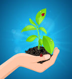 Green plant in hand Stock Images