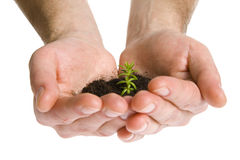 Green plant in hands Stock Image