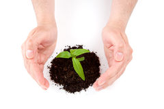 Green plant between hands Royalty Free Stock Images