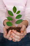 Green plant in hands Stock Photos