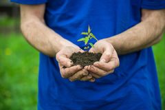 Green plant in hands Stock Images