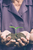 Green plant in the hands Stock Images