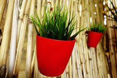 Green plant hanging on bamboo fence Stock Photo