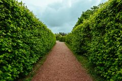 Green plant hedge, pathway in garden or park, corridor perspective view, landscape design concept. Toned Royalty Free Stock Images