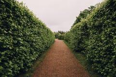 Green plant hedge, pathway in Petergof in St.Petersburg garden or park, corridor perspective view, landscape design concept. Toned Stock Photos