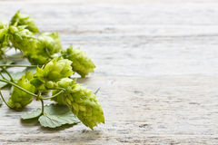Green plant hops Stock Image