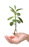 Green plant hovering above human hand Royalty Free Stock Image