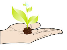 Green plant in human hand stock illustration