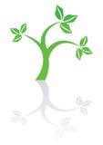 Green plant icon Stock Photos