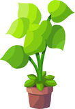 Green Plant. This Illustration is green plant with lots of leaves.There is in addition a vector format (EPS 10 Royalty Free Stock Photography