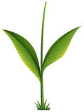 A green plant Stock Photos