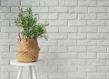 Free Green Plant In A Decorative Basket In Modern Interior Stock Photography - 131484132
