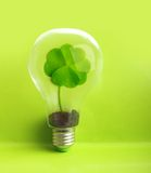 Green plant inside light bulb Royalty Free Stock Images