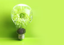 Green plant inside light bulb Stock Image