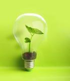 Green plant inside light bulb Stock Photography