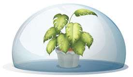 A green plant inside a round cystal Royalty Free Stock Images