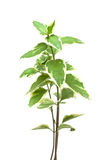 Green plant isolated Stock Image