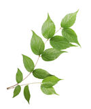 Green plant isolated on white background. Stock Photos
