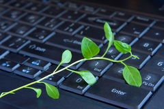 Green plant on keyboard Royalty Free Stock Photography