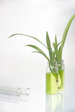 Green plant in laboratory Stock Photos