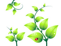Green branch Stock Image
