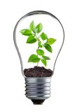Green plant in the lamp Royalty Free Stock Photos