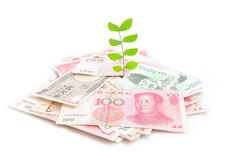 Green plant leaf growing on money Royalty Free Stock Image