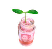 Green plant leaf growing on money Royalty Free Stock Photo